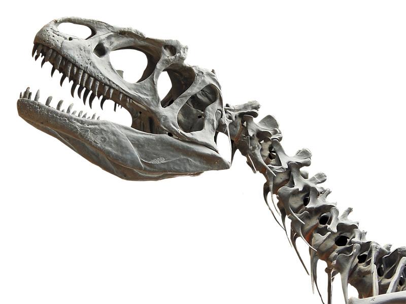 Experimentos para niños: Cómo fabricar un fósil