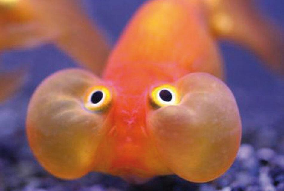 Los peces de los lectores