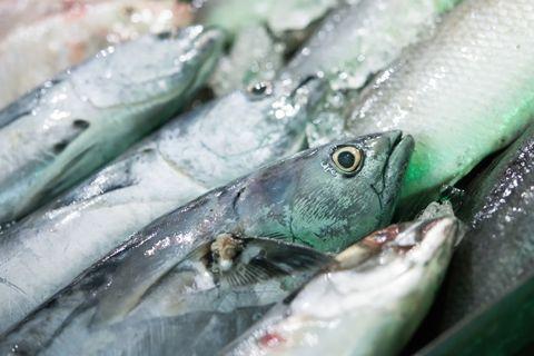 ¿Quién dio antidepresivos a los peces?