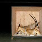 Galería de animales disecados