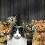 Gatos: ¿dulces mascotas o felinos salvajes?
