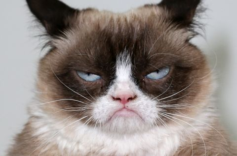 ¿Qué pasaría si todos los gatos desaparecieran?