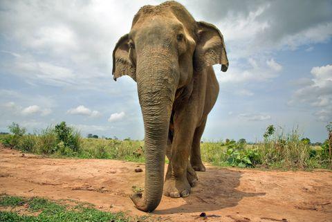 Los elefantes podrían tener habilidades matemáticas