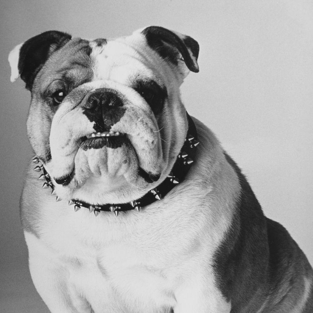 Los perros con sobrepeso pueden morir hasta dos años y medio antes