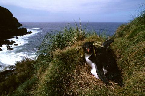 Ratones gigantescos amenazan a las aves de esta isla