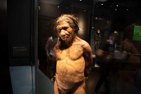 Nos separamos de los neandertales mucho antes de lo que creíamos