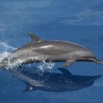 ¿Ha aprendido este delfín a comunicarse con otra especie?
