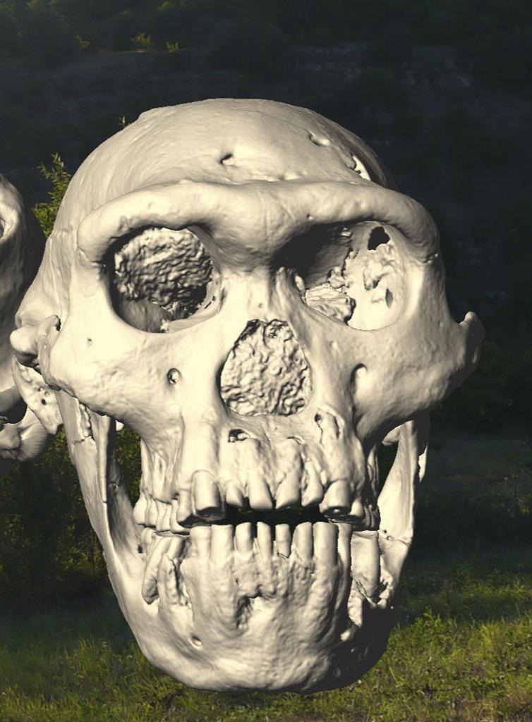 ¿Había una sola especie de Homo?