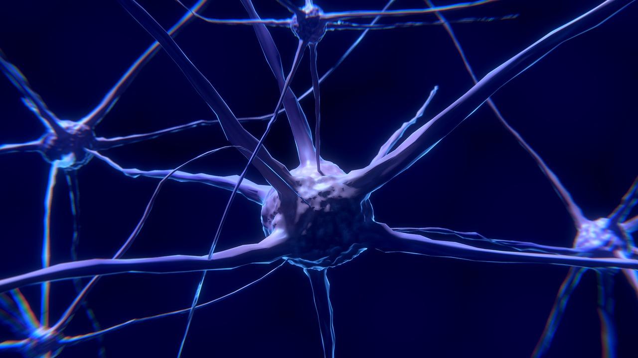 Hallan siete veces más bacterias en cerebros con Alzheimer que en  sanos