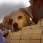 Hay personas que están hiriendo a sus mascotas para que les receten opioides