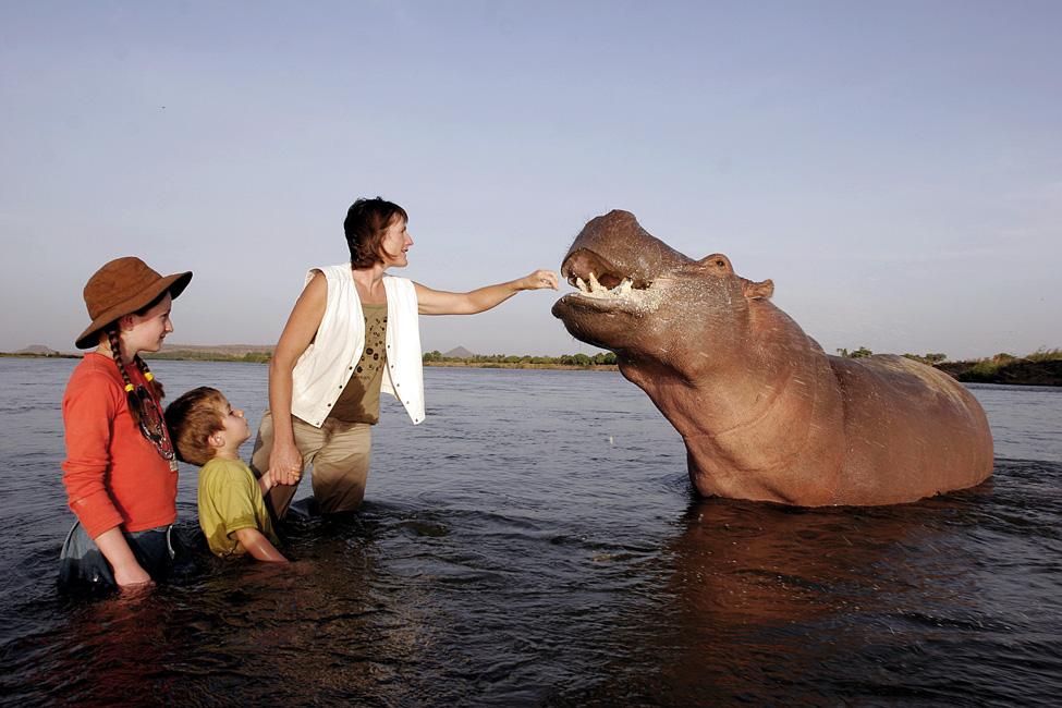 Hipopótamo domado