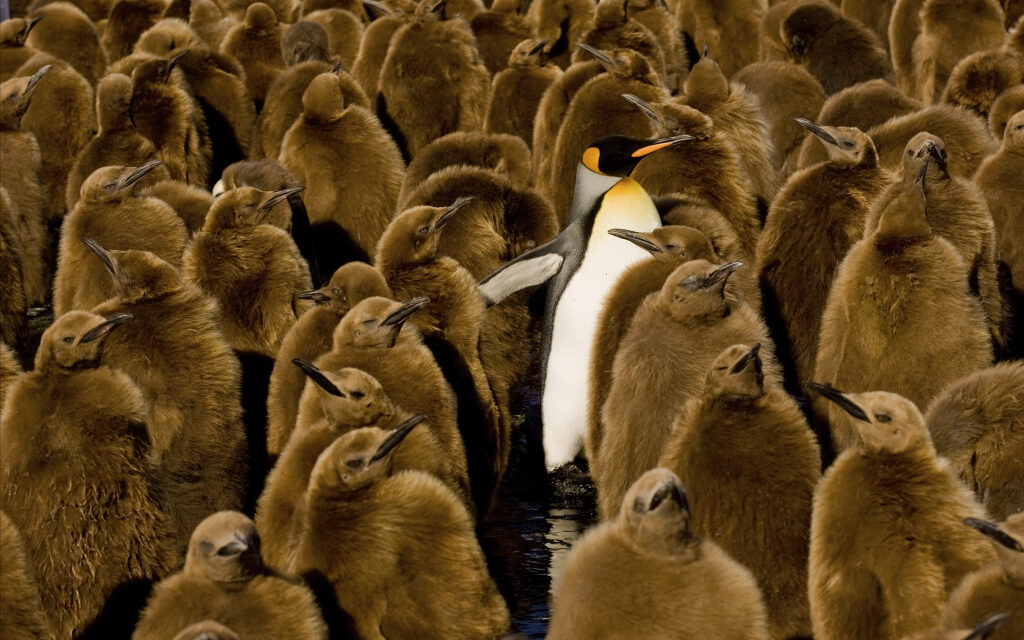 Hoy celebramos el día del pinguino