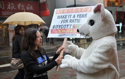 La hepatitis de las ratas salta al ser humano en Hong Kong