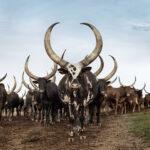Estas fotos rompen los tópicos sobre África
