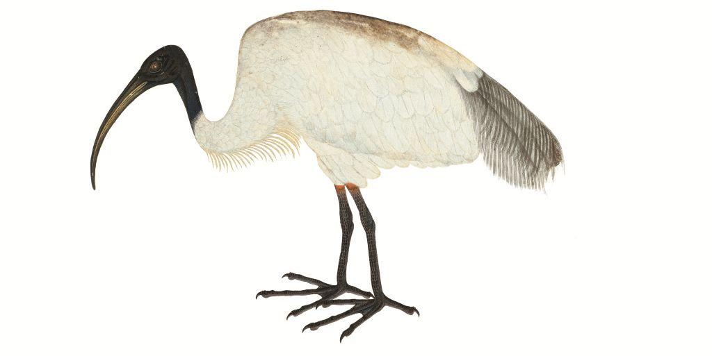 Aves extraordinarias
