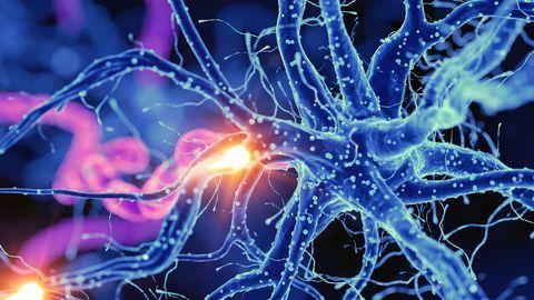 Nuestro cerebro seguirá creando nuevas neuronas hasta que cumplamos 90 años