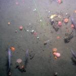 Impresionantes imágenes de los escapes de metano en el fondo marino