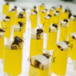 Insectos domados