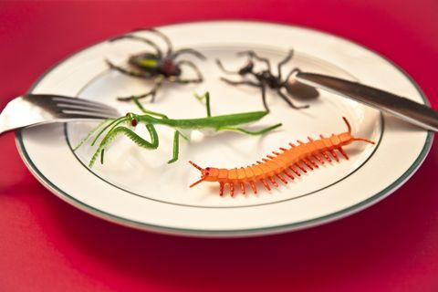 ¿Sobreviviríamos comiendo solo insectos?