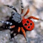 La araña es bella
