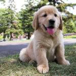 La ciencia descubre a qué edad los cachorros son más adorables