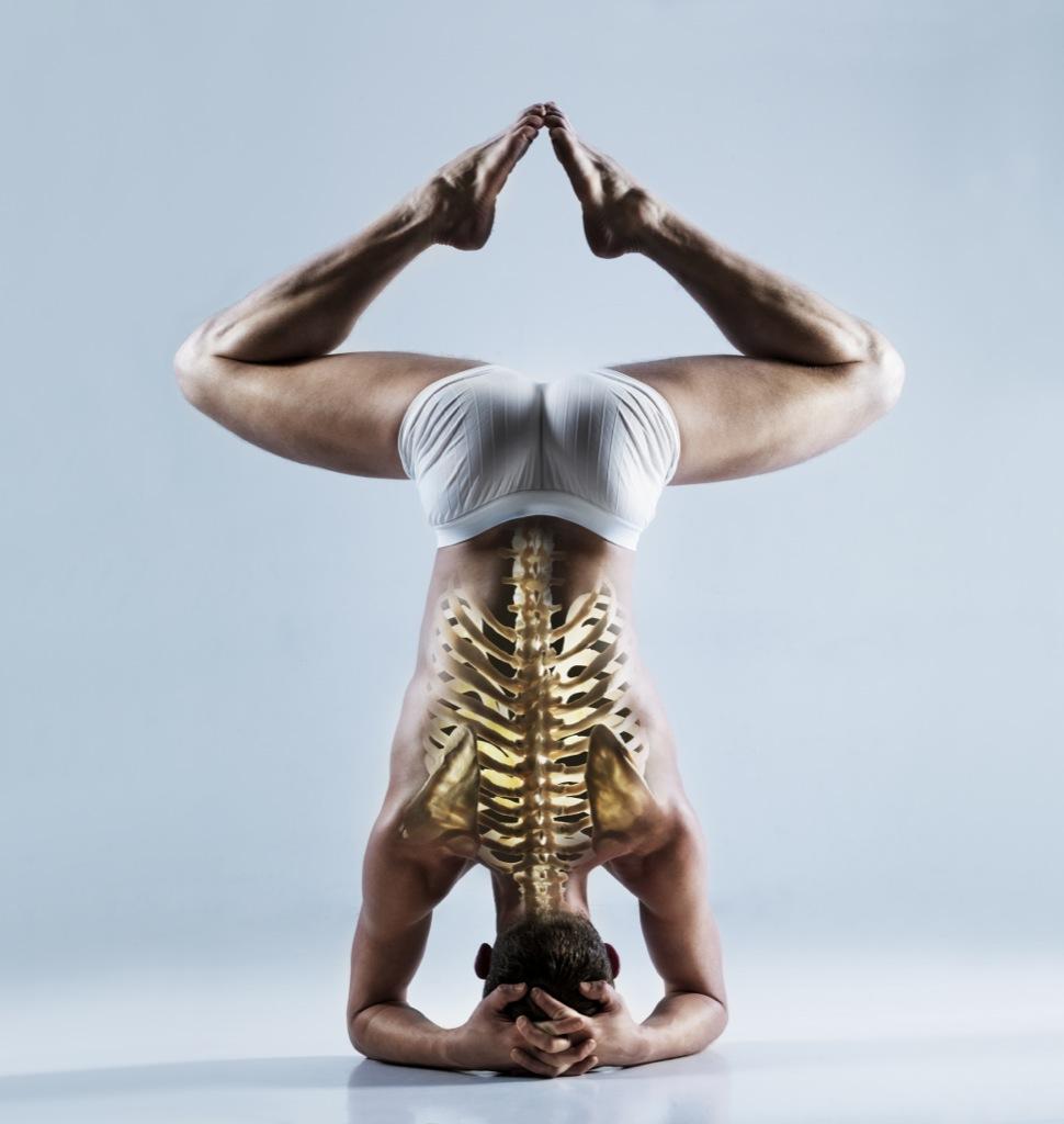 La columna vertebral, una estructura perfecta