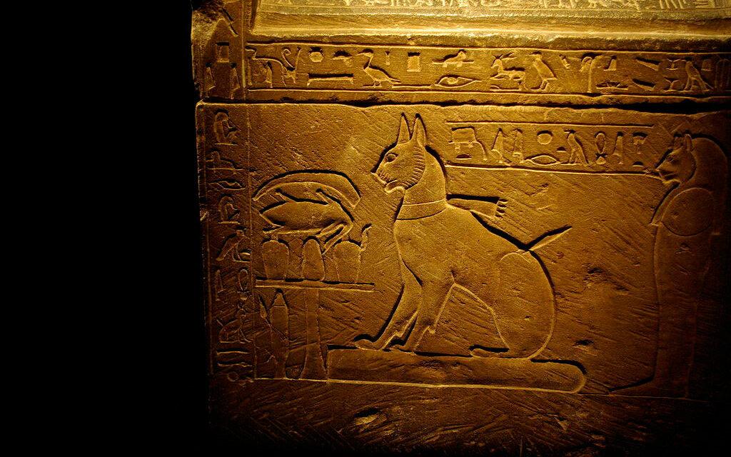 La domesticación de los gatos comenzó en Egipto