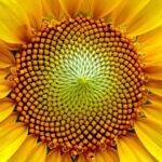 La espiral de Fibonacci