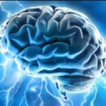 La forma del cerebro anticipa el éxito en una dieta