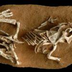 La incubación de los huevos de dinosaurios era de entre 3 y 6 meses
