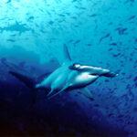 La mayor biomasa de tiburones del mundo está en Galápagos