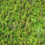 La política de renovables europea daña los bosques