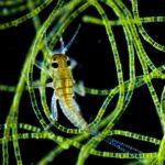 La vida secreta de los microorganismos