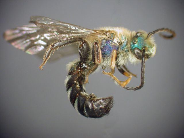 Las abejas reinan