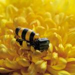 Las abejas se extinguen