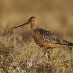 Las aves del Ártico no tienen dónde ir