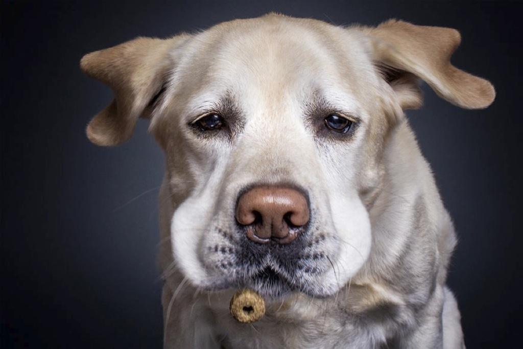 Las caras más divertidas que puede poner tu perro