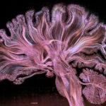Las mejores imágenes de ciencia del año
