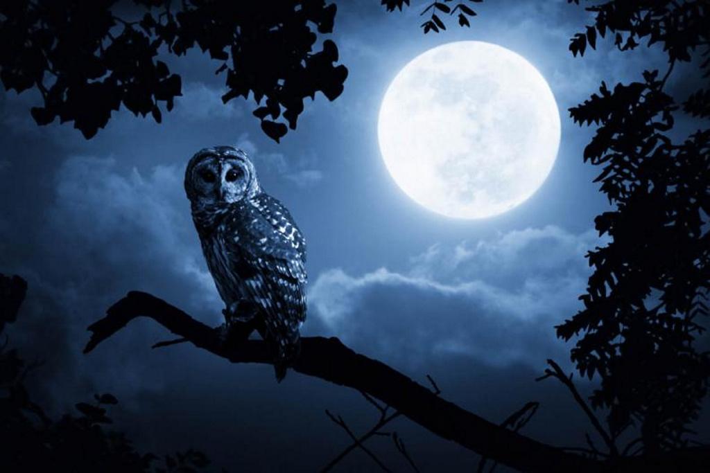 Las personas con hábitos nocturnos tienen más riesgo de muerte prematura