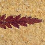 Las plantas aparecieron 100 millones de años antes de lo que se creía