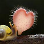 Las setas y los hongos, reyes de la naturaleza