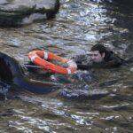 Leones marinos al rescate