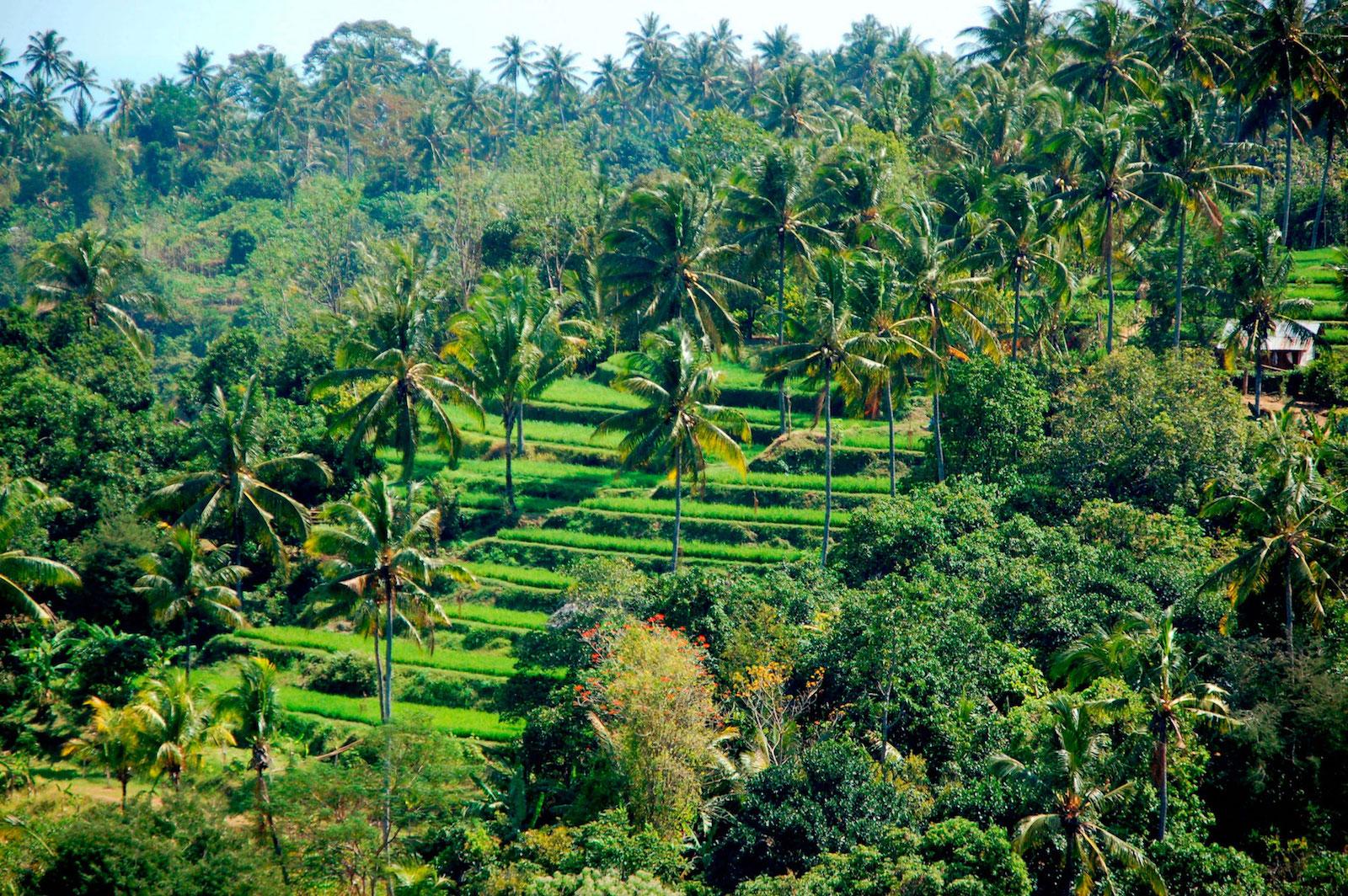 Llevamos al menos 45.000 años alterando las selvas tropicales