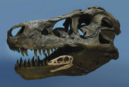 Lo nuevo del T-Rex