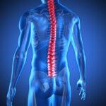 Logran reparar en monos lesiones graves en la médula espinal