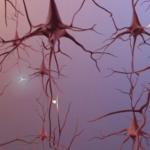 Logran revertir el Alzheimer en ratones adultos