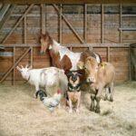 Los animales de granja posan como supermodelos