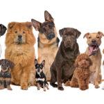 Los animales ya no podrán ser considerados legalmente como simples «cosas»