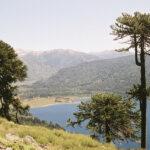 Los bosques más amenazados fueron creados por el ser humano