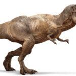 Los dinosaurios carnívoros no competían por las mismas presas
